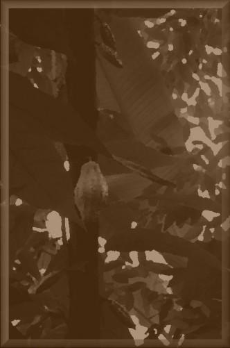 Kakao 011bb_1k